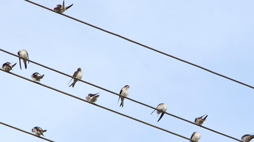 Zugvögel fliegen über die Gemeinde