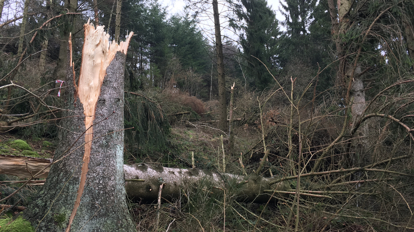 Waldwege sind wieder begehbar