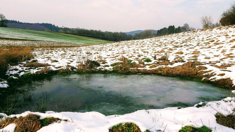 Flachwasserteiche sollen entgrast und geschlossen werden