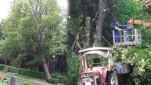 Baum auf Friedhof fällt