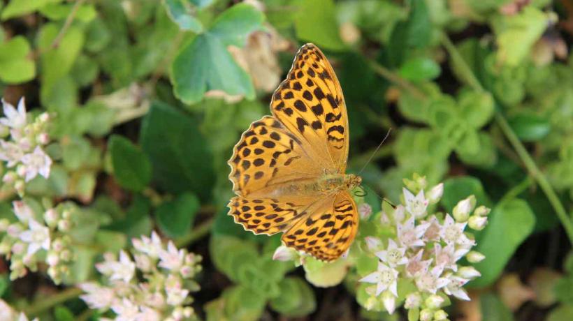 Ein Sommer für Schmetterlinge