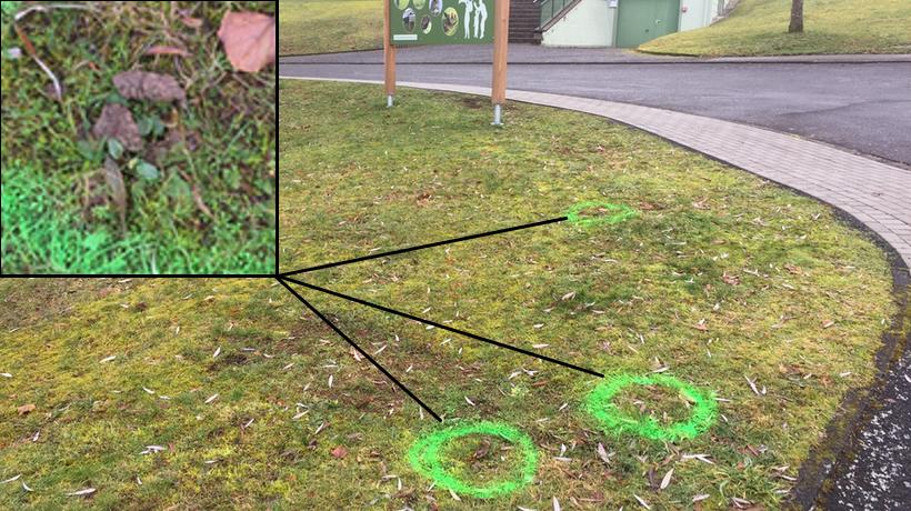 Die Scheiße in der Schmißberger Grünanlage
